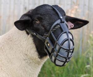 A sheep with a muzzle which calls us to become part of a Reformation